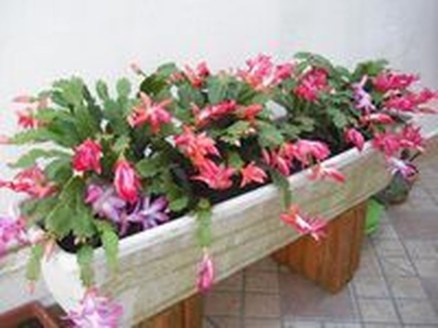Beautiful Plant Decors For Your House 15