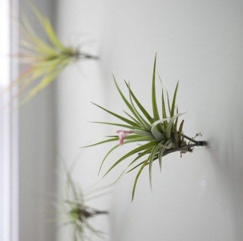 Beautiful Plant Decors For Your House 24