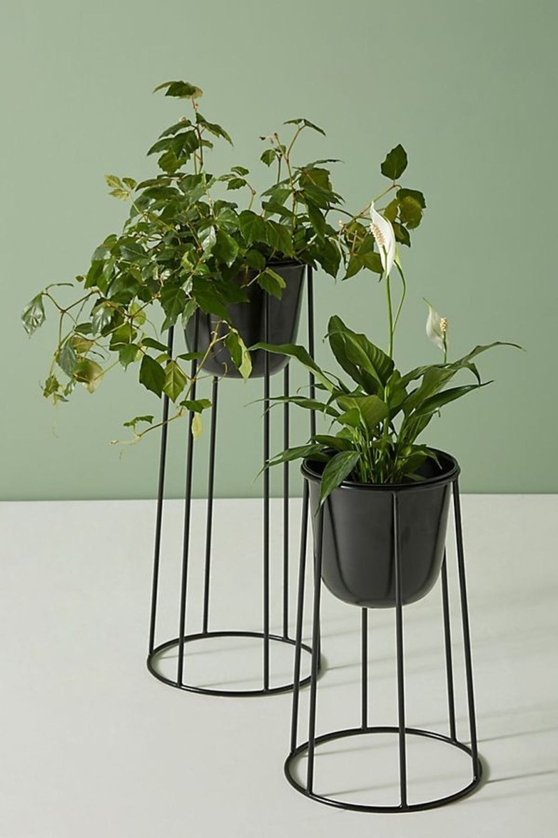 Beautiful Plant Decors For Your House 29