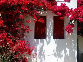 Beautiful Facades With Vines And Climbers 04