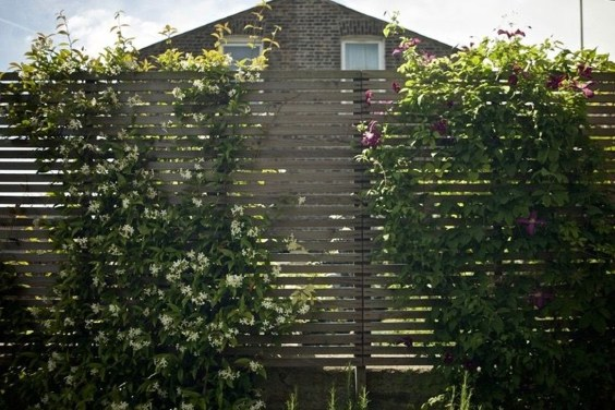 Beautiful Facades With Vines And Climbers 12