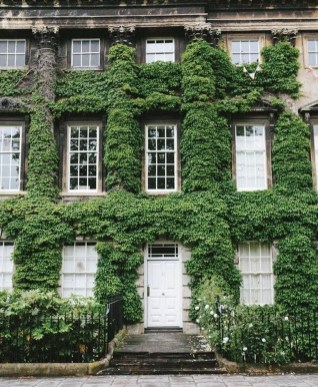 Beautiful Facades With Vines And Climbers 20