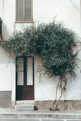 Beautiful Facades With Vines And Climbers 21