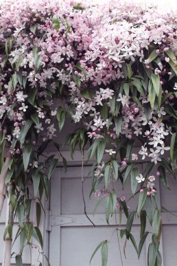 Beautiful Facades With Vines And Climbers 22