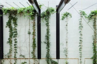 Beautiful Facades With Vines And Climbers 45