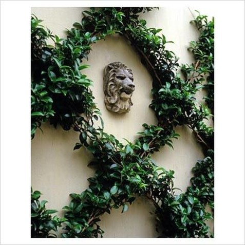 Beautiful Facades With Vines And Climbers 49