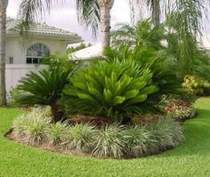 Cute Palm Gardening Ideas For Front Yard 03