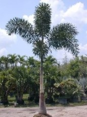 Cute Palm Gardening Ideas For Front Yard 13