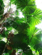 Cute Palm Gardening Ideas For Front Yard 14