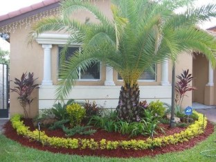 Cute Palm Gardening Ideas For Front Yard 25