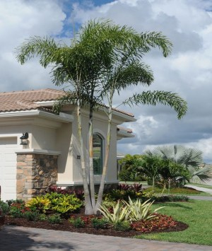 Cute Palm Gardening Ideas For Front Yard 38