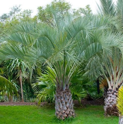 Cute Palm Gardening Ideas For Front Yard 40