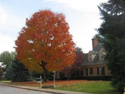 Incredible Autumn Decorating Ideas For Backyard 32