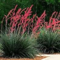 Delightful Landscape Designs Ideas 26