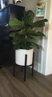 Magnificient Indoor Decorative Ideas With Plants 10