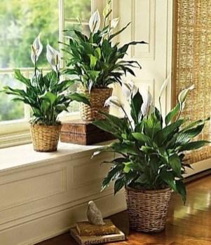 Magnificient Indoor Decorative Ideas With Plants 18