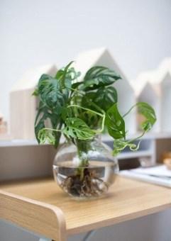 Magnificient Indoor Decorative Ideas With Plants 21