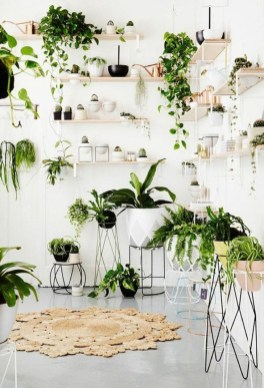 Magnificient Indoor Decorative Ideas With Plants 27