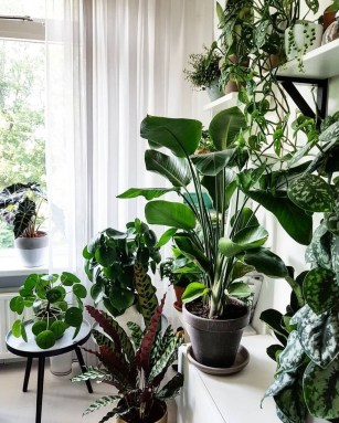Magnificient Indoor Decorative Ideas With Plants 34