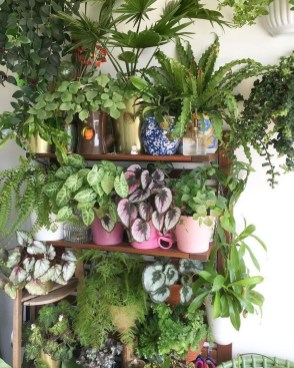 Magnificient Indoor Decorative Ideas With Plants 43