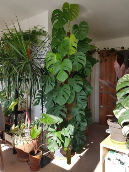 Magnificient Indoor Decorative Ideas With Plants 48