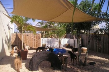 Comfy Diy Backyard Projects Ideas For Your Pets 08