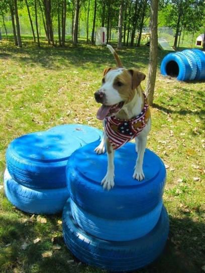 Comfy Diy Backyard Projects Ideas For Your Pets 17