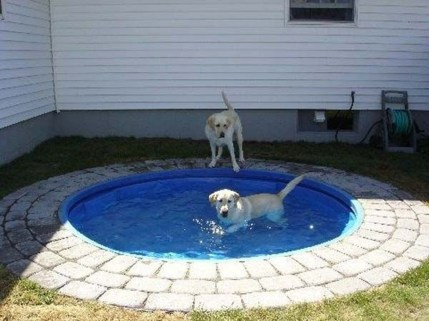 Comfy Diy Backyard Projects Ideas For Your Pets 21