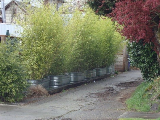 Dreamy Bamboo Fence Ideas For Small Houses To Try 43