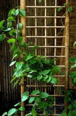 Dreamy Bamboo Fence Ideas For Small Houses To Try 48