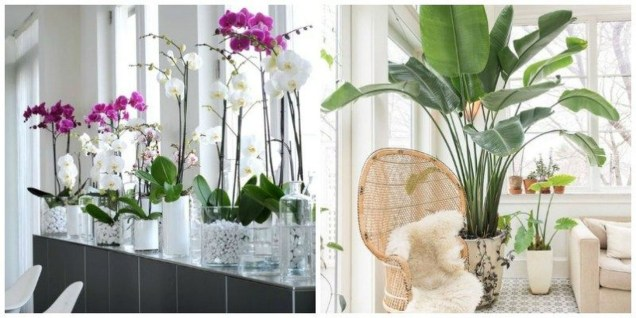 Rustic Houseplants Design Ideas That Are Safe For Animals 09