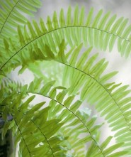 Rustic Houseplants Design Ideas That Are Safe For Animals 35