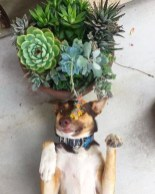 Rustic Houseplants Design Ideas That Are Safe For Animals 43