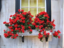 Lovely Window Design Ideas With Plants That Make Your Home Cozy 29