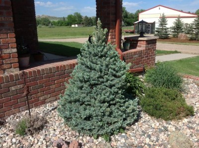 Pretty Christmas Front Yard Landscaping Ideas14