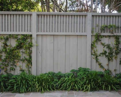 Inspiring Privacy Fence Ideas16
