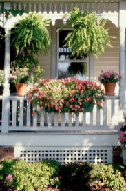 Wonderful Flower In Pots Ideas For Your Window05