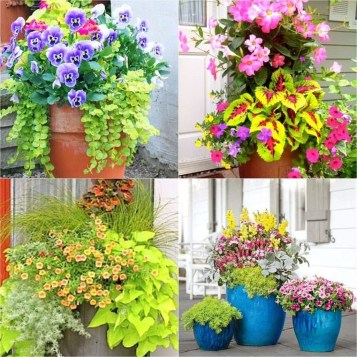 Wonderful Flower In Pots Ideas For Your Window07