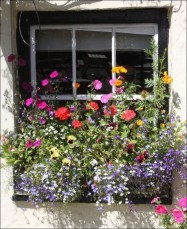 Wonderful Flower In Pots Ideas For Your Window27