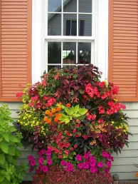 Wonderful Flower In Pots Ideas For Your Window43