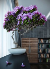 Awesome Tree Interior Design Ideas To Apply Asap37