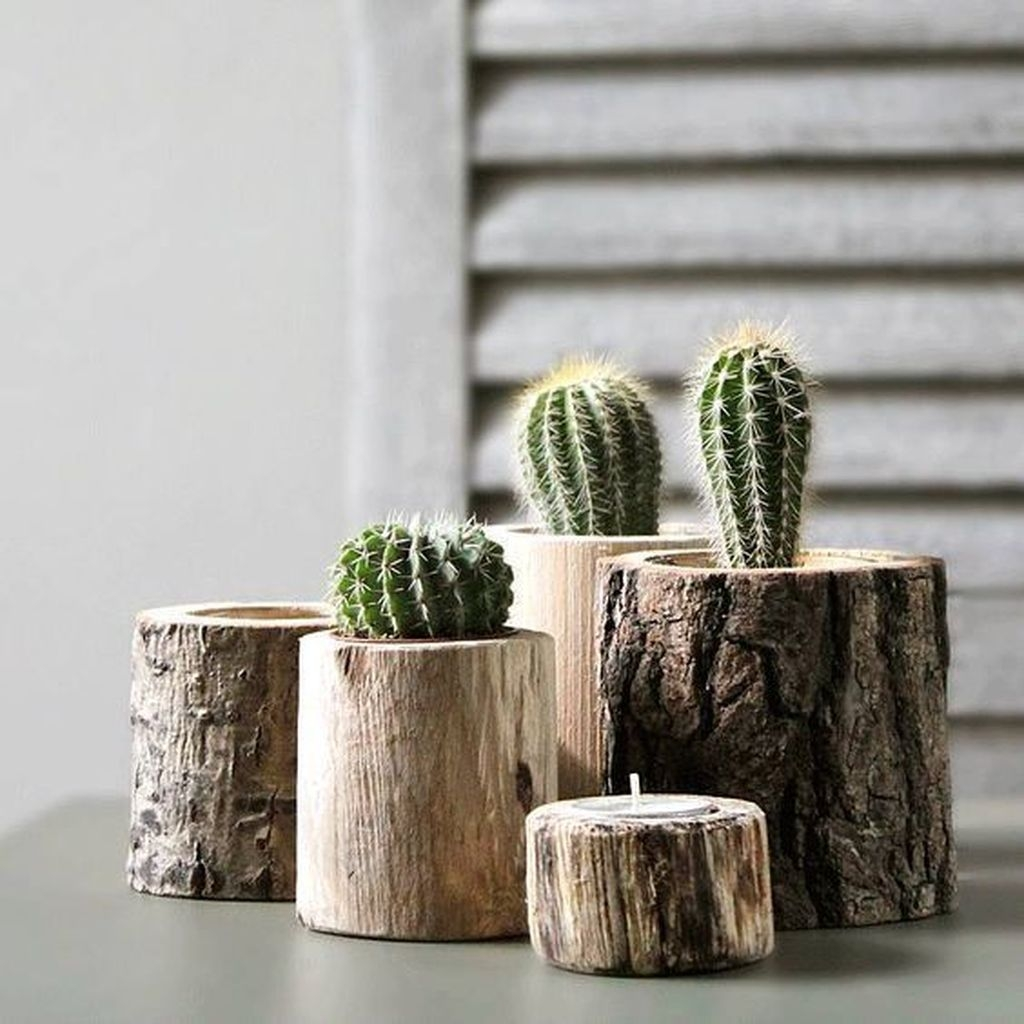 Cool Small Cactus Ideas For Interior Home Design12