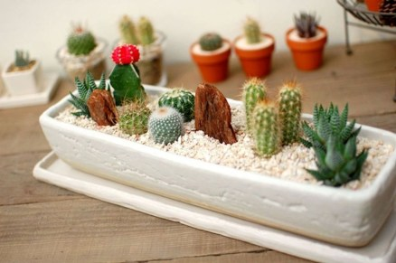 Cool Small Cactus Ideas For Interior Home Design16