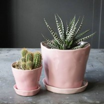 Cool Small Cactus Ideas For Interior Home Design32