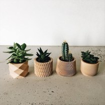 Cool Small Cactus Ideas For Interior Home Design33