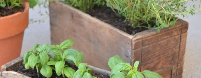 Affordable Container Herb Garden Ideas