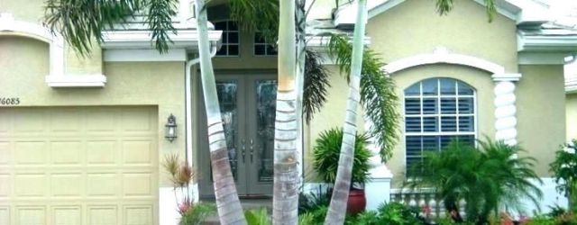Affordable Palm Tree Garden Ideas