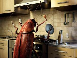 roach-cooking