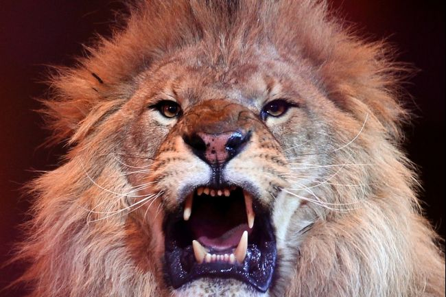 #8. The Lion is not King of the Jungle
