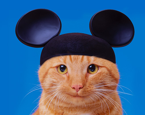 Disneyland releases about 200 cats overnight to keep their gardens free of rodents